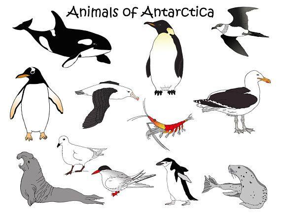 Antarctica Animals Downloadable clipart orca penguin seal.