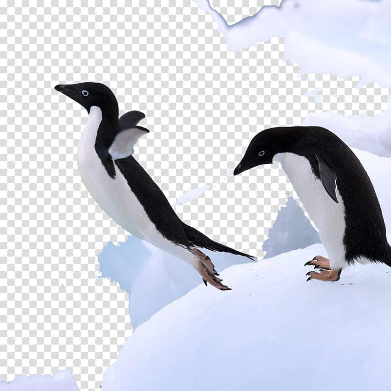 Mr. Poppers Penguins Antarctica Bird, Antarctic penguins.
