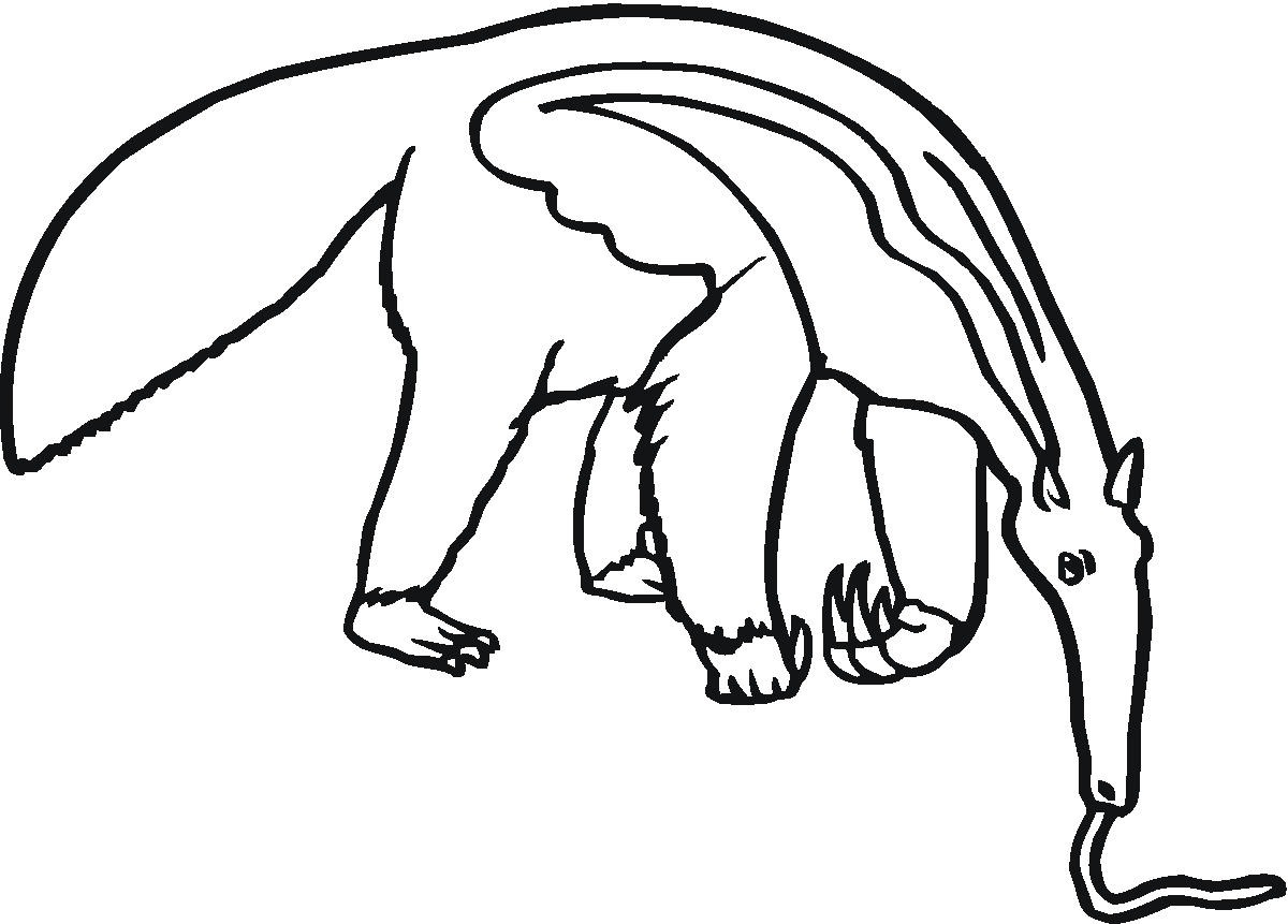 Anteater Eating Clip Art.