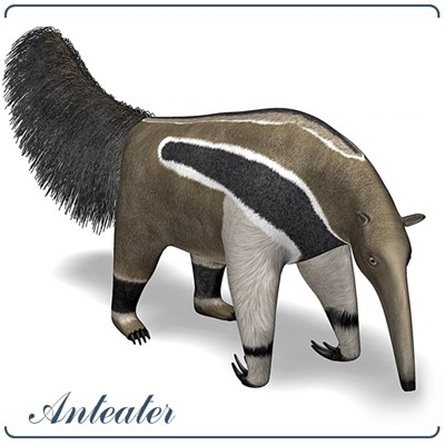 Anteater Clipart.