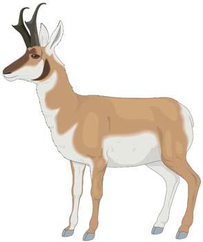 Antelope Clip Art, Vector Antelope.