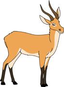 Antelope clipart #17