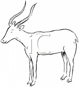 Antelope Clipart.