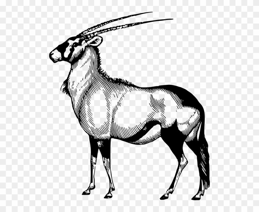 Drawing Hippopotamus Antelope.