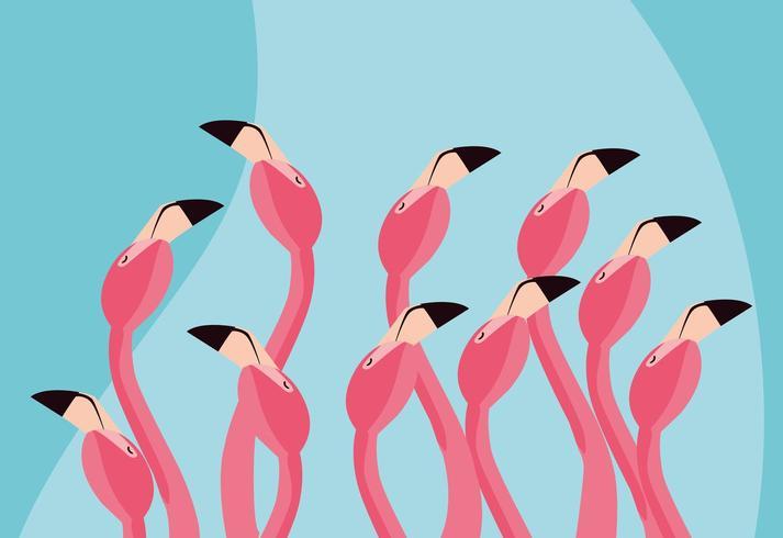 flamingos birds flock heads.