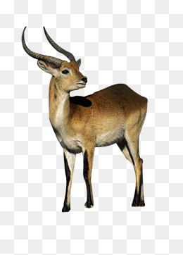 Antelope Png, Vector, PSD, and Clipart With Transparent Background.