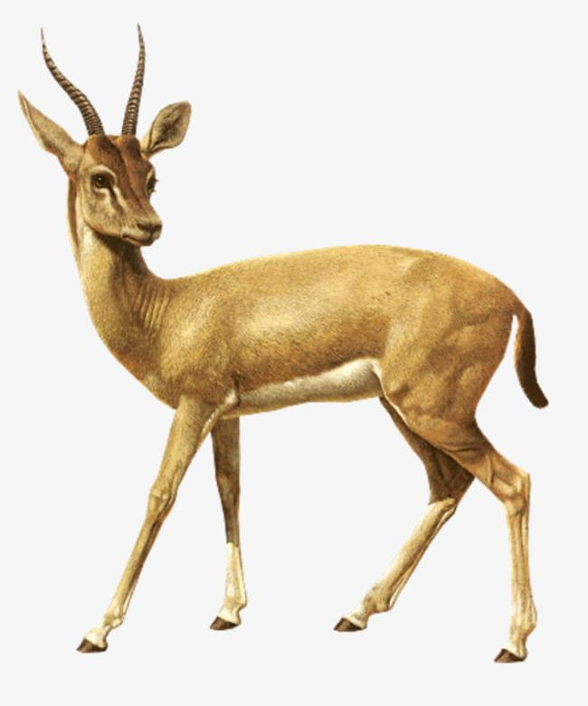 African Antelope PNG, Clipart, Africa, African Clipart, Agile.