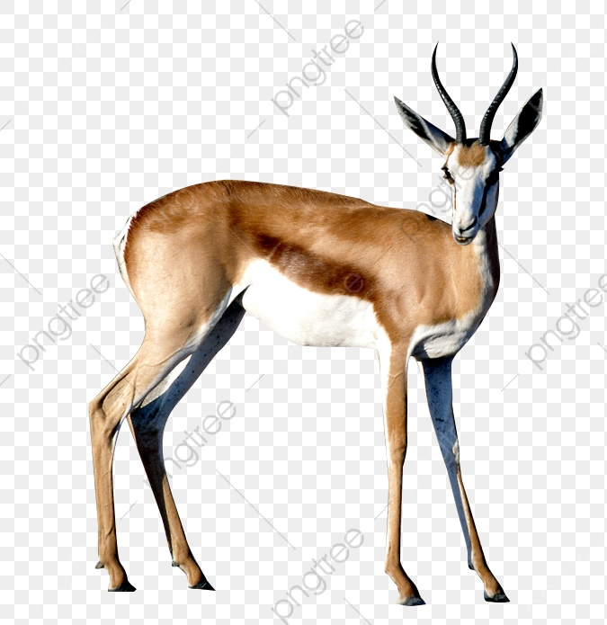 Wild Antelope, Animal, Run, Male PNG Transparent Image and Clipart.