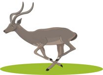 Search Results for antelope clipart.