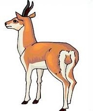 Free Antelope Clipart.