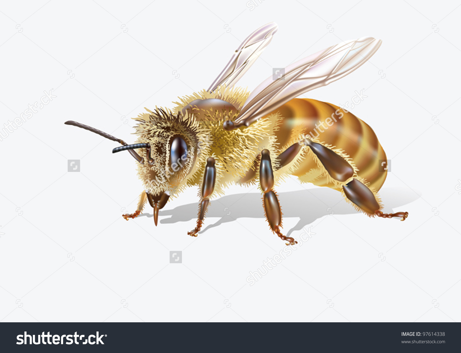 Eps 8/ Bee On White Background [Anthophila] Stock Vector.