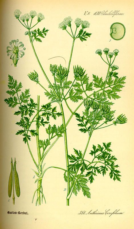 17 Best images about Herbal on Pinterest.