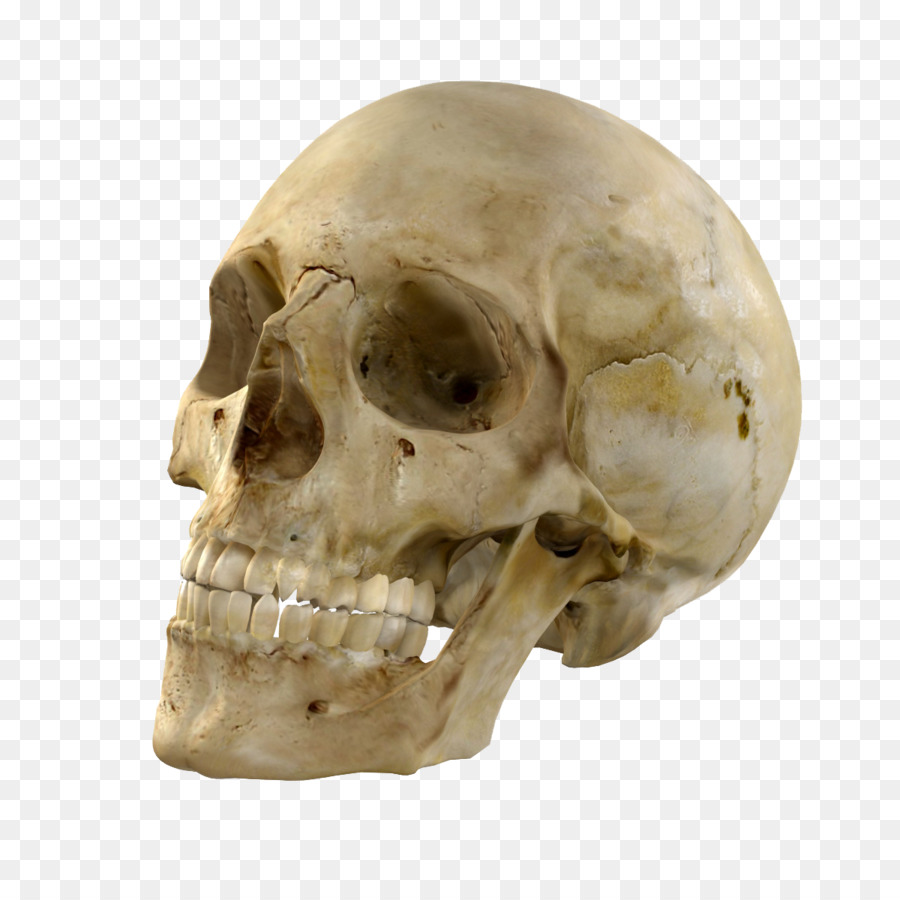 Skull Clipart.
