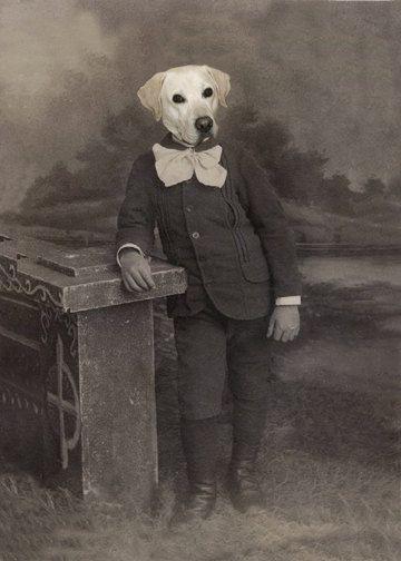 Vivien, Springer Spaniel Dog Print, Anthropomorphic.