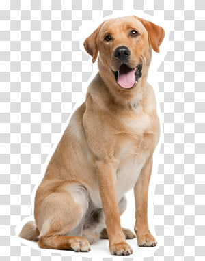 Golden Retriever Puppy Dog Daze Industrial Handyman.