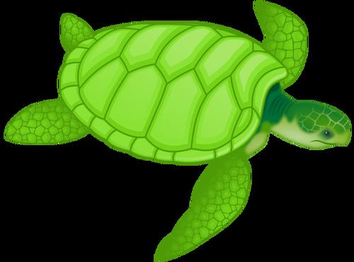 Green sea turtle vector clip art.