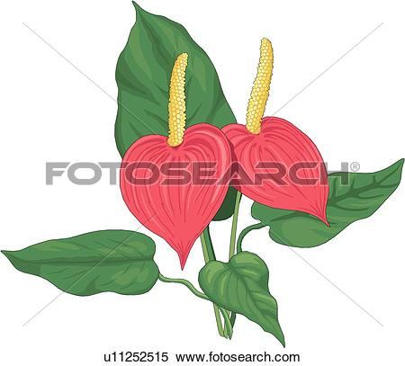 Clipart of Anthurium u11252515.