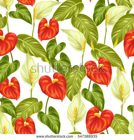 Anthurium Stock Photos, Royalty.