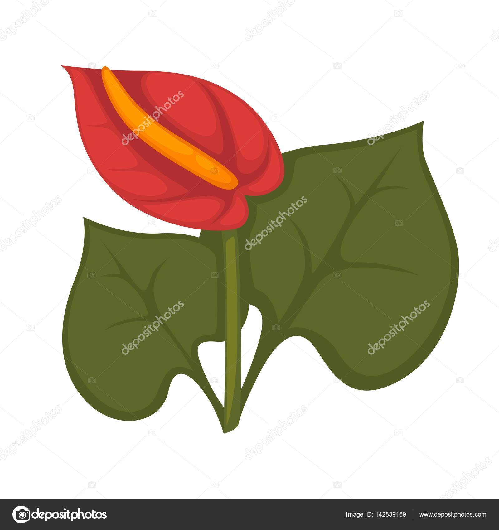 Anthurium andraeanum red flower — Stock Vector © Sonulkaster.
