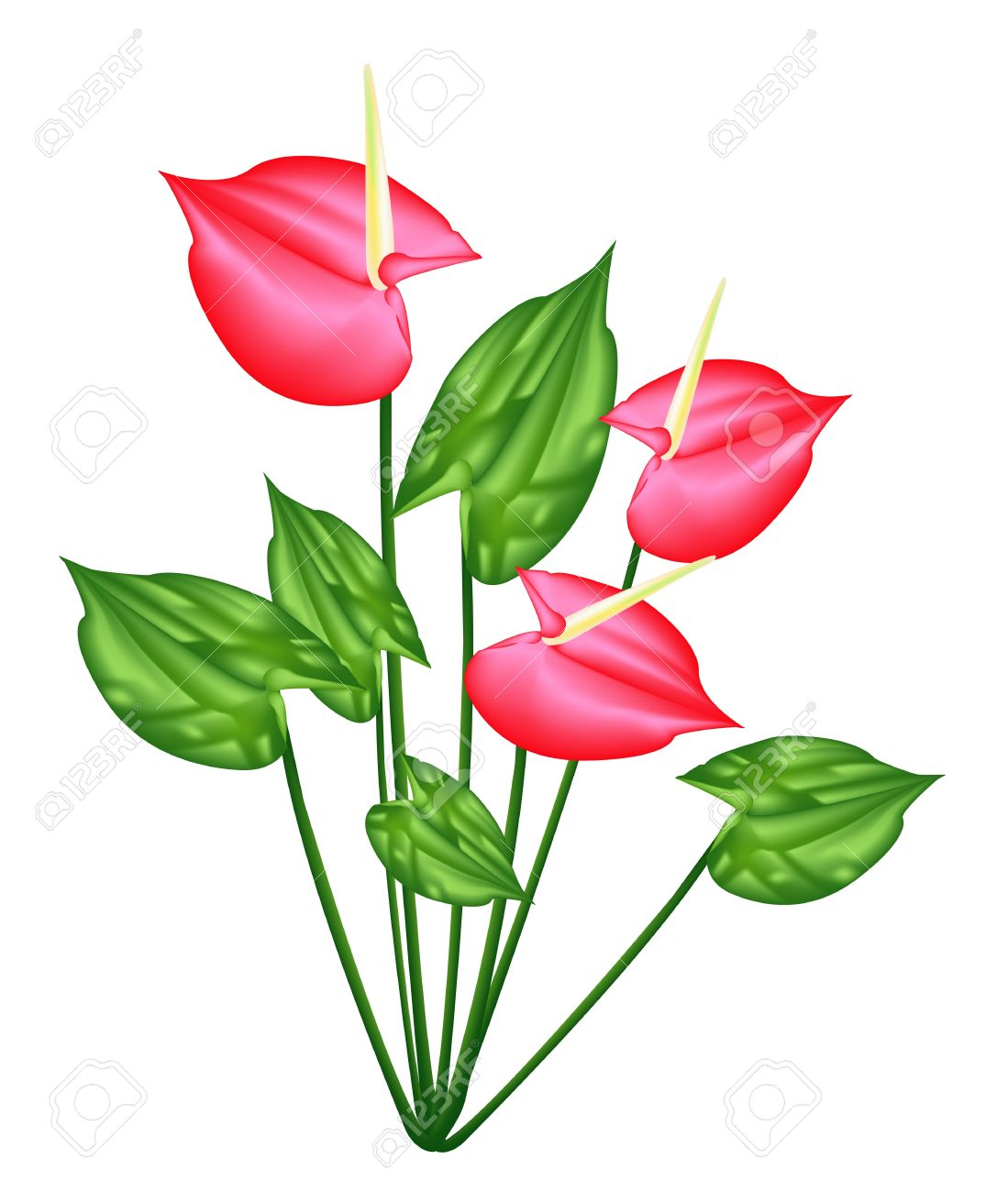 295 Anthurium Stock Vector Illustration And Royalty Free Anthurium.