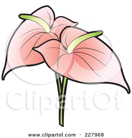 Two Pink Anthurium Flamingo Flowers Posters, Art Prints by Lal.