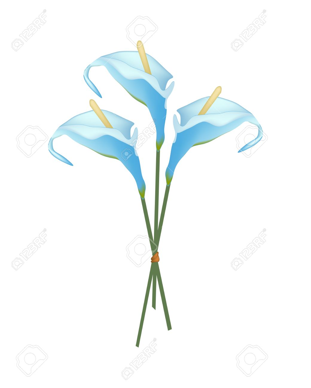 Beautiful Flower, Illustration Of Bouquet Of Blue Anthurium Flower.