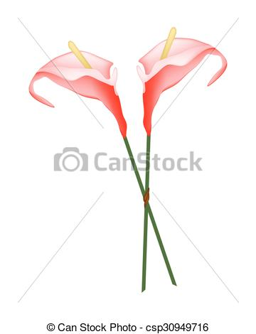 Vector Clip Art of Red Anthurium Flowers or Flamingo Flowers on.