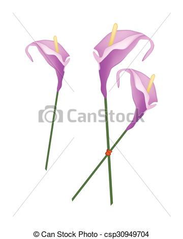 Vector Clipart of Purple Anthurium Flowers or Flamingo Flowers on.