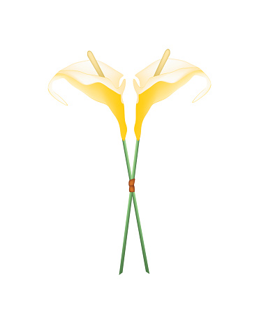 Flamingo Flower Clip Art, Vector Images & Illustrations.