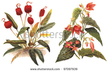 Flamingo Flower Stock Photos, Royalty.