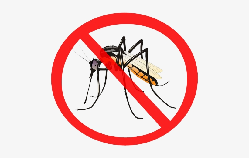 Mosquito Png.
