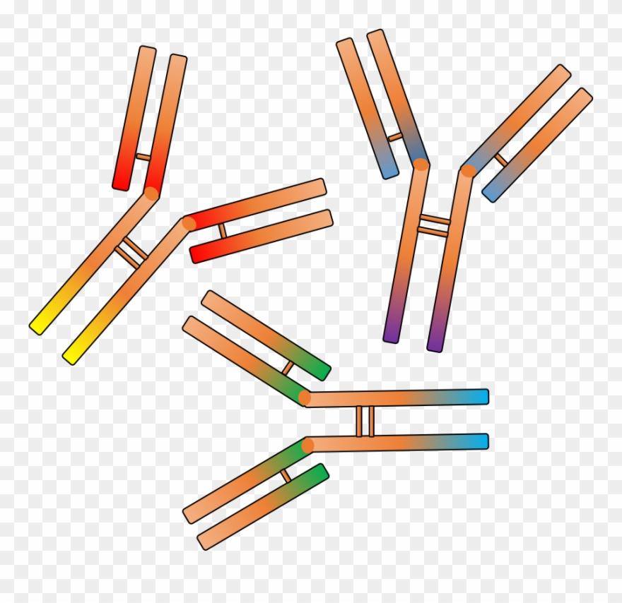 Rabbit Polyclonal Antibody Service.