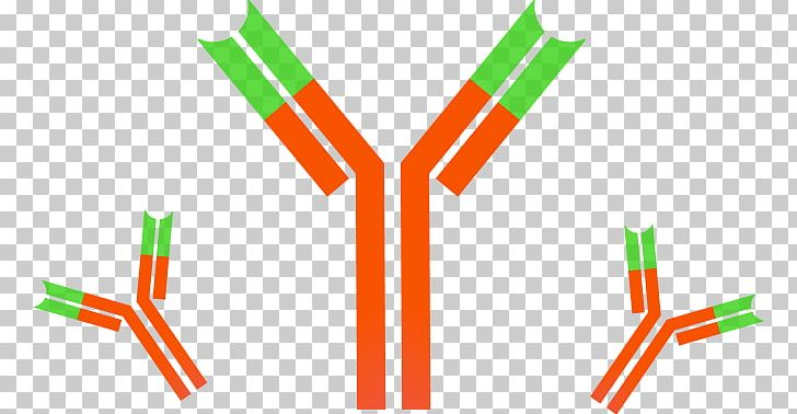 Monoclonal Antibody Immune System Dynabeads Antigen PNG, Clipart.