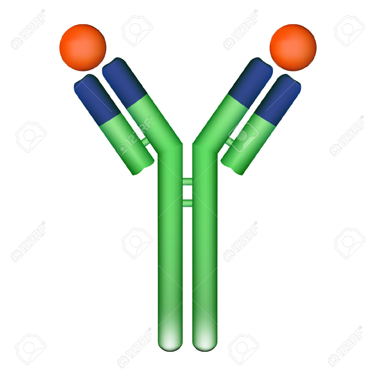 Antibody Images & Stock Pictures. Royalty Free Antibody Photos And.