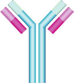 Antibody Clipart Free.