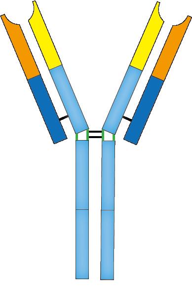 File:201603 antibody.png.