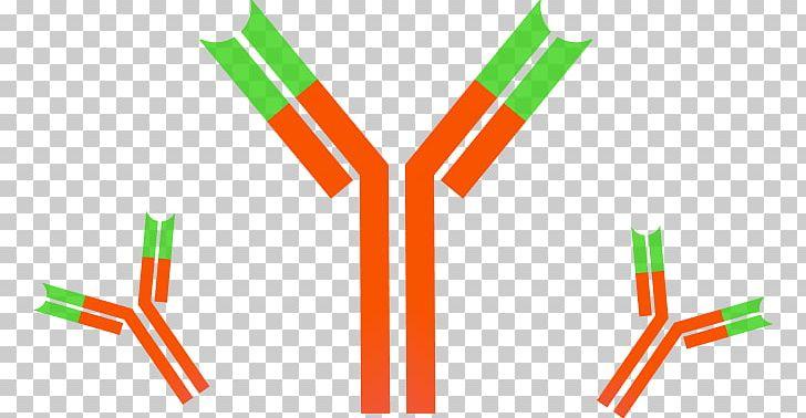 Monoclonal Antibody Immune System Dynabeads Antigen PNG.