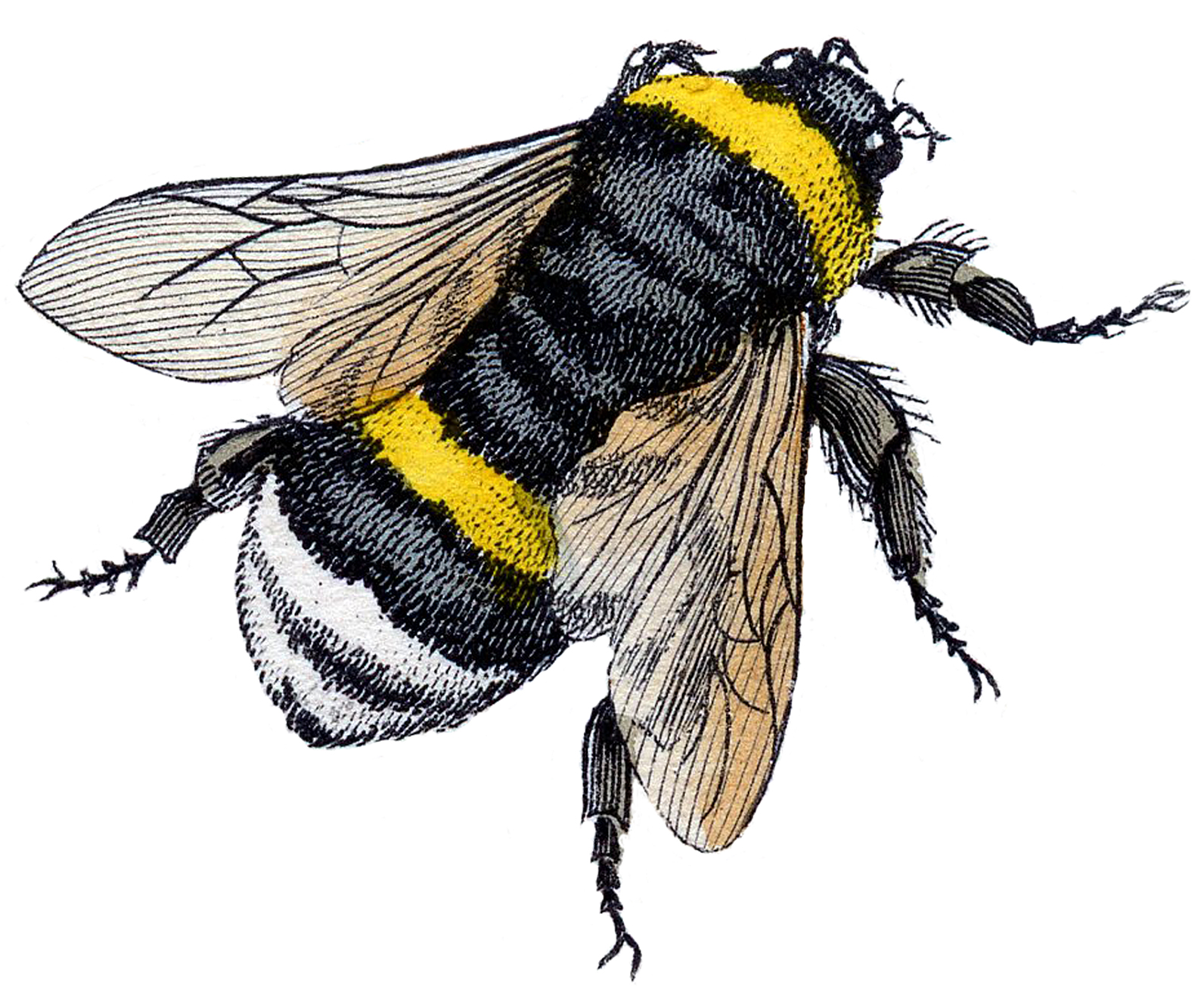 15 Bee Images.