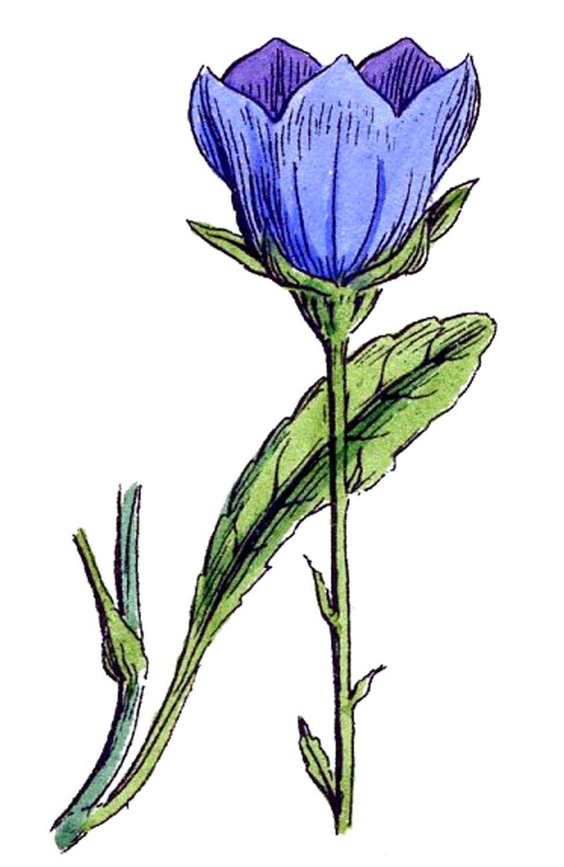 14 Botanical Wildflower Clipart!.