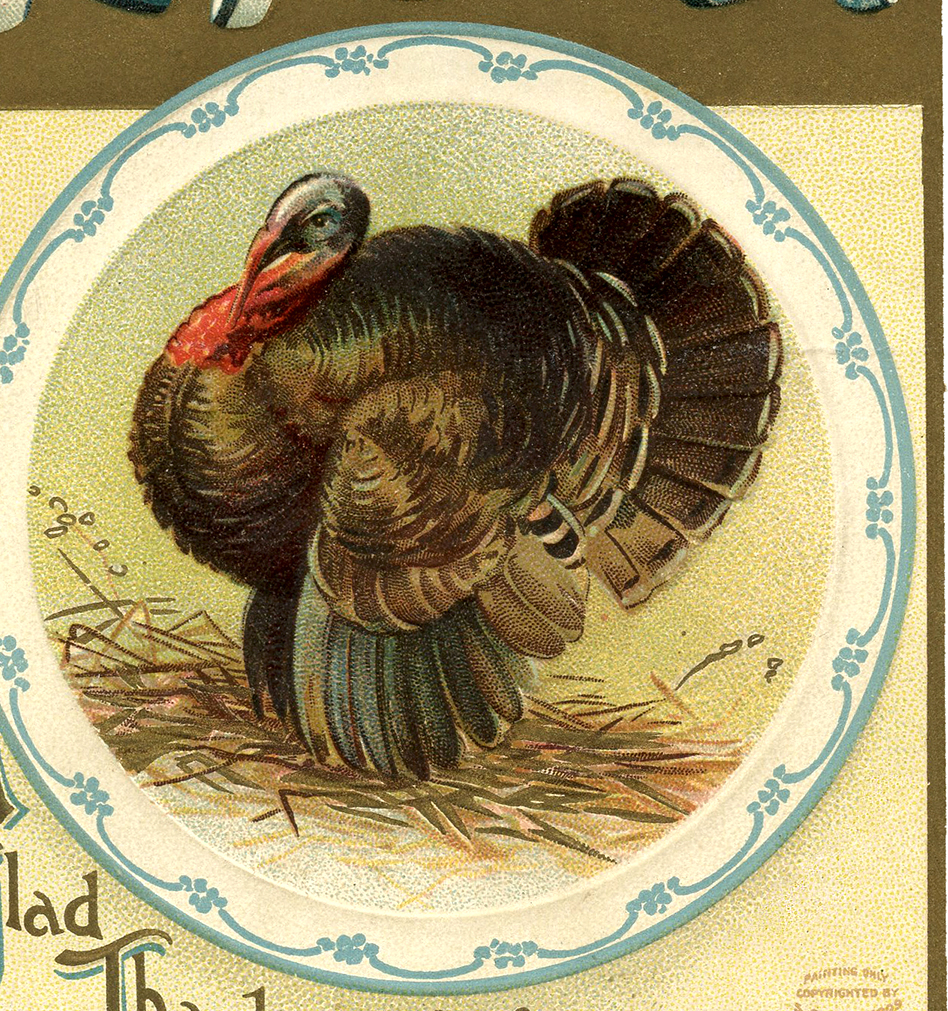 6 Thanksgiving Postcards with a Turkey!.