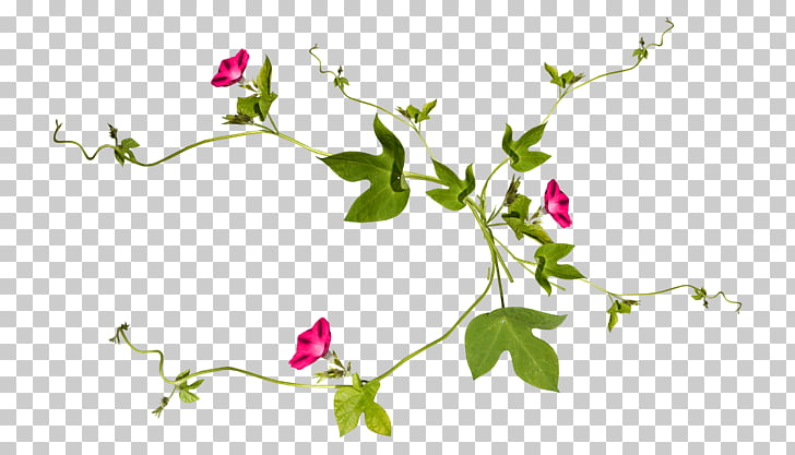 Vine Plant Drawing Flower, Antique jewelry material.