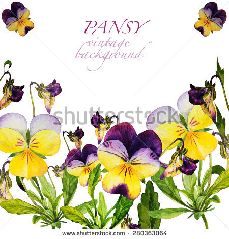 Bud Pansy Purple Vector Stock Images, Royalty.