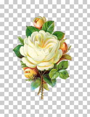 284 antique White Flower PNG cliparts for free download.