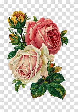 Antique White Flower transparent background PNG cliparts.