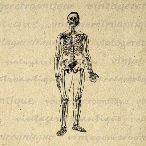 Printable Digital Skeleton X Ray Image by.