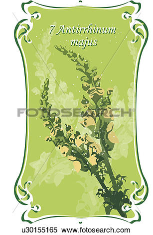Stock Illustration of green, antirrhinum majus, snapdragon.