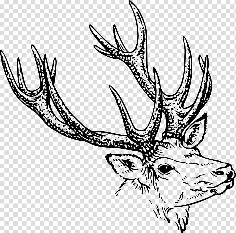 Deer Line art Drawing , deer antlers transparent background.