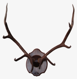 Free Antlers Clip Art with No Background.