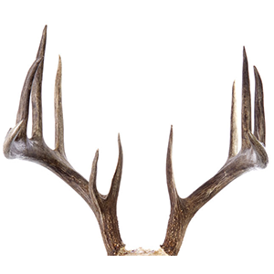 Antlers Png (102+ Images In Collection) #517243.