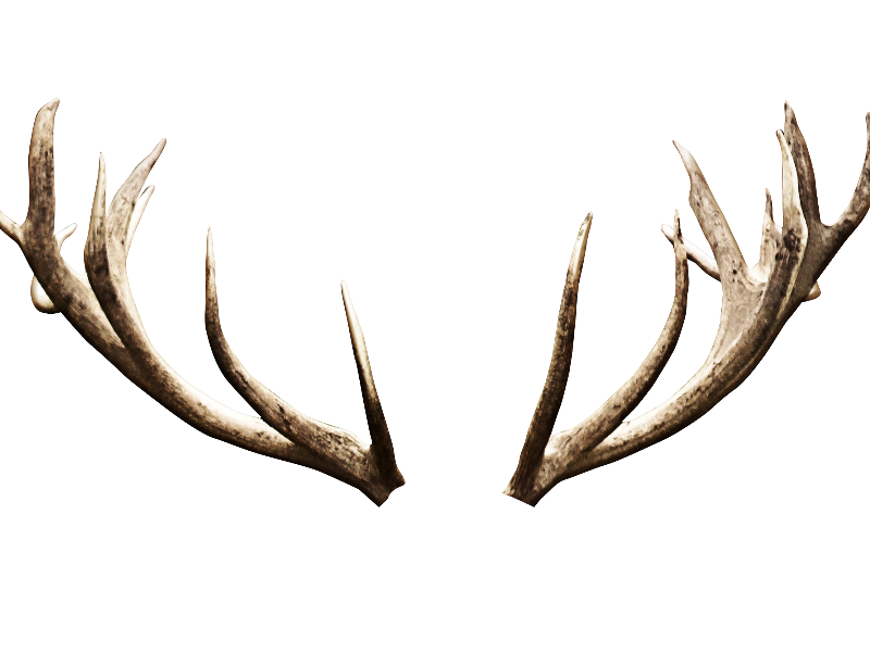 Deer Antlers Horns PNG Image (Isolated.